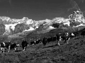 Top 5: Taverne della Valle d'Aosta
